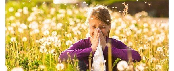 Quel miel d'allergies?